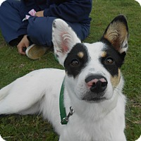 Adopt A Pet :: Winnie - Lockhart, TX