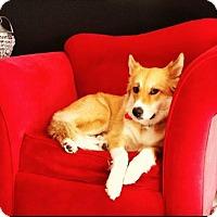 Adopt A Pet :: Ellie - Encino, CA