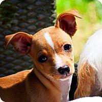 Adopt A Pet :: Joey - Arden, NC