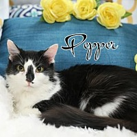 Adopt A Pet :: Pepper  Female - Knoxville, TN