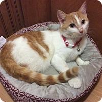 Adopt A Pet :: Oliver - Greensburg, PA