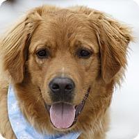 Adopt A Pet :: Walton - Ile-Perrot, QC
