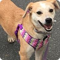 Adopt A Pet :: Cali - Richmond, VA