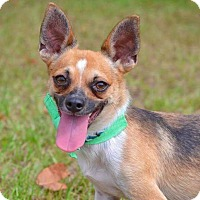 Adopt A Pet :: Rebel - Bonaire, GA