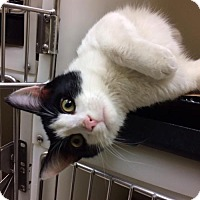 Adopt A Pet :: Mookie (Petco Hamilton square) - Trenton, NJ