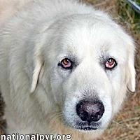 Adopt A Pet :: Mishka in PA - Beacon, NY
