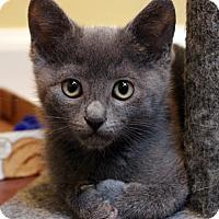 Adopt A Pet :: Mochi - San Jose, CA