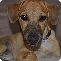Adopt A Pet :: Bilbo Beggins' - Pittsburgh, PA