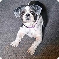 Adopt A Pet :: Jack Turner - Urbana, OH