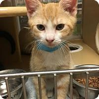 Adopt A Pet :: Elvis - Philadelphia, PA