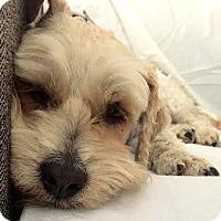 Adopt A Pet :: Rio-ADOPTION PENDING - Boulder, CO