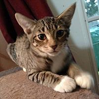 Adopt A Pet :: Dixie - Jacksonville, FL
