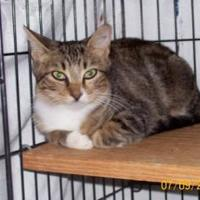 Adopt A Pet :: Faithie - Garland, TX