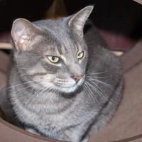 Adopt A Pet :: Fee - Pet SuperMarket - Fernandina Beach, FL