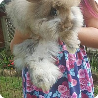 Adopt A Pet :: Ted - Hartford, CT