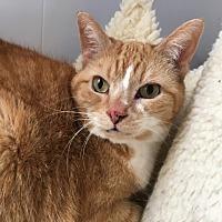 Adopt A Pet :: Ingrid - Green Bay, WI