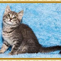 Adopt A Pet :: A la mode - Mt. Prospect, IL