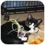 Photo 2 - Domestic Shorthair Kitten for adoption in Port Republic, Maryland - Timmy