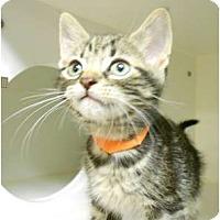 Adopt A Pet :: Jack - Maywood, NJ