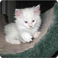 Adopt A Pet :: Hannah - Lethbridge, AB