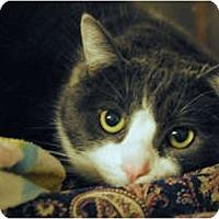 Adopt A Pet :: Roxy - Lunenburg, MA
