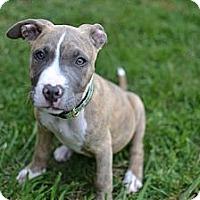 Adopt A Pet :: Libby - Los Angeles, CA