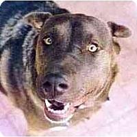 Adopt A Pet :: Lacey - Scottsdale, AZ