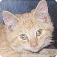 Adopt A Pet :: Leon - Annapolis, MD