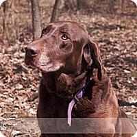 Adopt A Pet :: Morris - Lewisville, IN