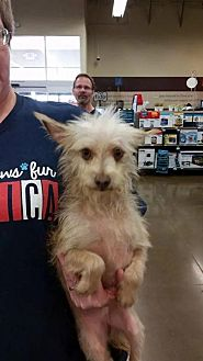 Terrier (Unknown Type, Medium) Mix Dog for adoption in Fresno, California - Einstein