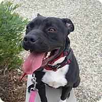 Adopt A Pet :: Arissa - Las Vegas, NV