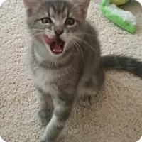 Adopt A Pet :: Hermes - North Highlands, CA