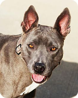 Terrier (Unknown Type, Medium) Mix Dog for adoption in Toccoa, Georgia - Diamond