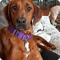 Adopt A Pet :: Bernadette - Charelston, SC
