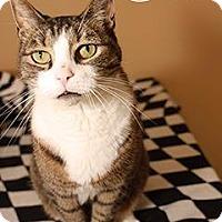 Adopt A Pet :: Sam - Fall River, MA