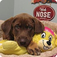 Adopt A Pet :: Angelica - South Dennis, MA