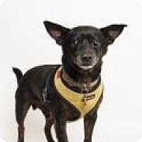 Adopt A Pet :: Jet - Santa Cruz, CA
