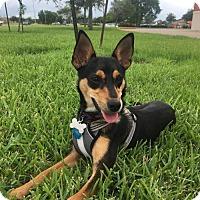 Adopt A Pet :: Lucy - Lake Jackson, TX