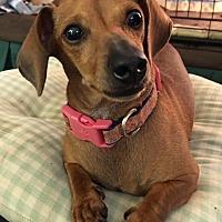 Adopt A Pet :: Maya - Pearland, TX
