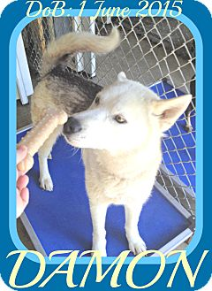 Husky Mix Dog for adoption in Manchester, New Hampshire - DAMON