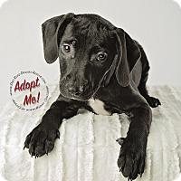 Adopt A Pet :: Sydney - Gillsville, GA
