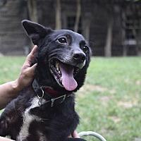 Adopt A Pet :: Casey - Washington, DC