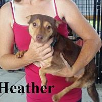 Adopt A Pet :: Heather - Leslie, AR