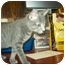 Photo 2 - Domestic Shorthair Cat for adoption in Tipton, Iowa - Tinker