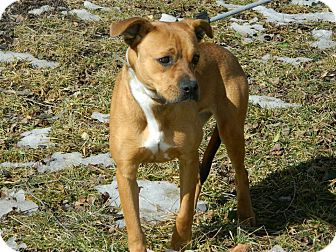 American Pit Bull Terrier/American Staffordshire Terrier Mix Dog for adoption in Cincinnati, Ohio - Sherry: Mariemont