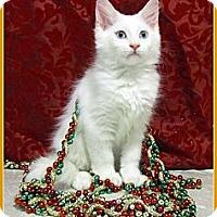 Adopt A Pet :: Bianca - Orlando, FL