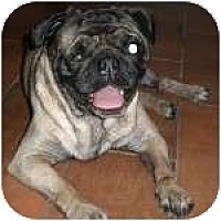 Adopt A Pet :: Ratchet - Windermere, FL