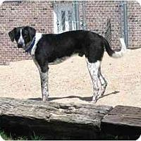 Adopt A Pet :: Ben - Wahoo, NE