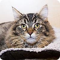Adopt A Pet :: Snickers - Irvine, CA