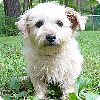 Adopt A Pet :: Stella - Mocksville, NC
